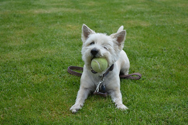 a dog with a tennis ball