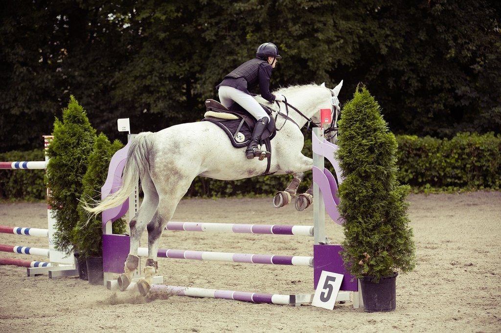 equestrian at a show jumping competition